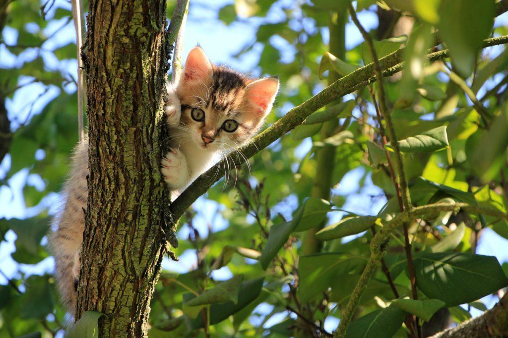 集中できない時に見る子猫の画像
