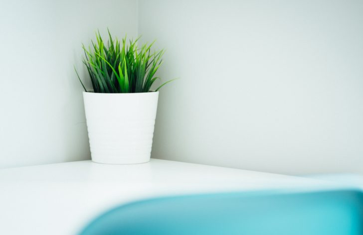 観葉植物ならハイドロカルチャーがオススメ
