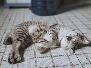昼寝の効果とは
