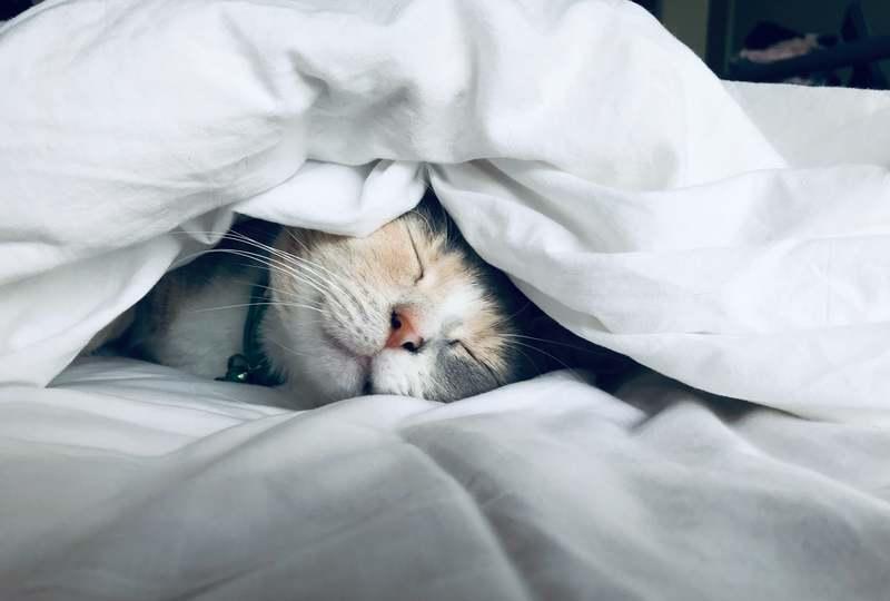 早起きが向かない人はどうすべきか